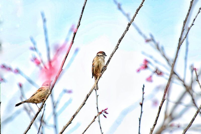 Two bird on flower tree Animals In The Wild Bird Perching One Animal Animal Themes Low Angle View Animal Wildlife Day Nature Branch No People Outdoors Bare Tree Beauty In Nature Sky Close-up Nature Photography Love Is In The Air