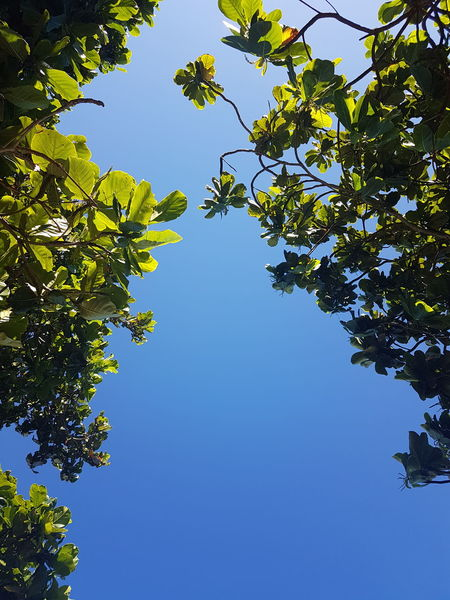 Perspectives On Nature Beauty In Nature Blue Branch Clear Sky Day Freshness Green Color Growth Leaf Low Angle View Nature No People Outdoors Sky Tree