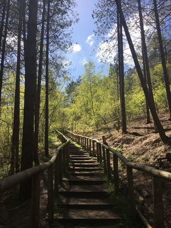 Nature Beauty In Nature The Way Up Outdoors No People Forest Day