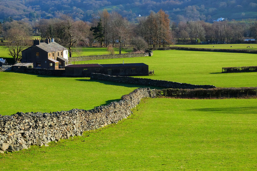 Cumbria England UK Architecture Beauty In Nature Building Exterior Built Structure Coniston Cottages Day Field Golf Golf Course Grass Green Color Growth History Lakedistrict Landscape Nature No People Outdoors Scenics Tranquil Scene Tranquility Travel Destinations Tree