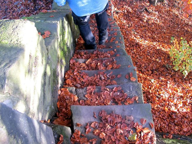 Steps Pause Standing Man Light And Shadow Orange Leaves Landscape Textures And Surfaces Nature On Your Doorstep Beautiful Nature Autumn Colors Autumn Leaves Autumn EyeEm Nature Lover Tree Trees Leaves Orange Nature Gorgeous Day Pattern Pieces Outdoor Photography Eye4photography  Seasons Contrast