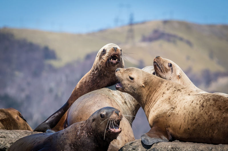 Group Of Animals Animal Wildlife Mammal Animal Themes Animal Animals In The Wild Nature Solid Day No People Focus On Foreground Rock Sea Rock - Object Land Underwater Aquatic Mammal Vertebrate Seal - Animal Relaxation Outdoors Sea Lion Animal Family Marine