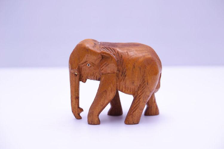 Close-up of elephant over white background