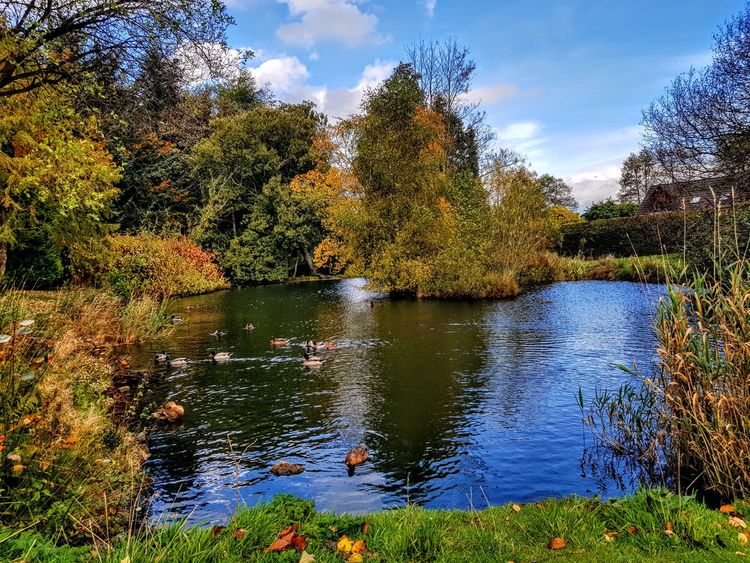 Duck pond 😄 Duck Ducks Animals In The Wild Bird Animal Themes Rural Scene Scenics Blue Beauty In Nature Duckpond Tree Lake Sky No People Outdoors Beauty In Nature Day Growth Nature Water The Week On EyeEm Today's Hot Look Samsung Galaxy Note 8 Samsungphotography Mobilephotography Perspectives On Nature