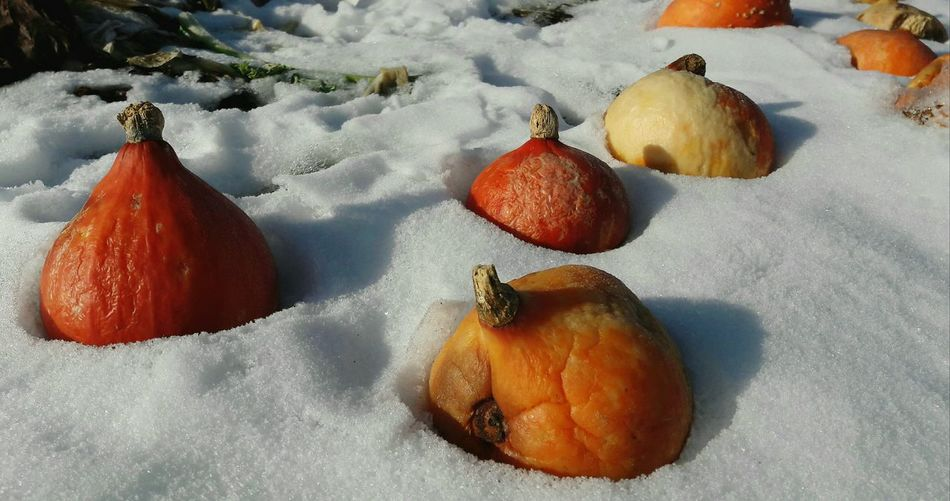 Waste Food Food Outdoors Day Orange Color EyeEmNewHere Winter Pumpkin No People Snow