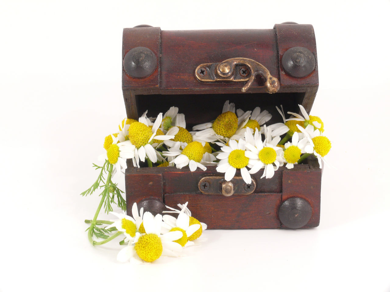 white background, flower, still life, music, studio shot, no people, old-fashioned, yellow, arts culture and entertainment, vintage, suitcase, luggage, close-up, day