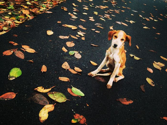 Check This Out Taking Photos Relaxing Hi! Enjoying Life Wet Leaves Fallen Fallen Leaves Outdoors 43 Golden Moments Dog Dog Love Happiness EyeEm Gallery Enjoying Life Flower Smiling Cute Cute Pets Lifestyles Streetdog Streetdogs