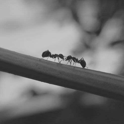 Close-up of ants fighting