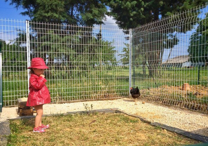 Gallinas Child And Pet Girl Red Simple Things In Life Nature Petite Fille Enfant Countryside Life Chickens Kids And Pets Child Domestic Animals