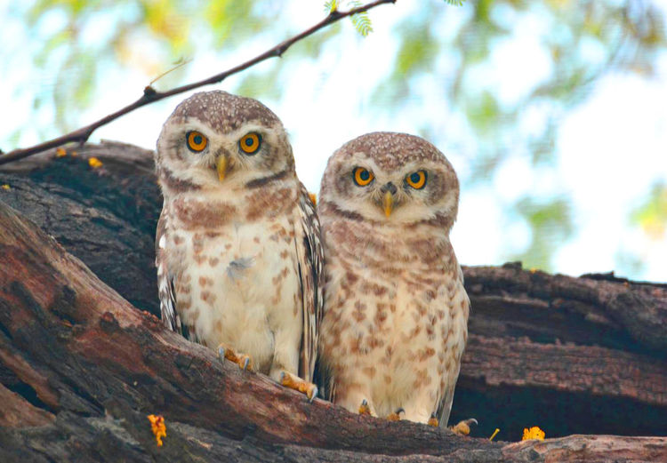 Close-up of owls perching on tree