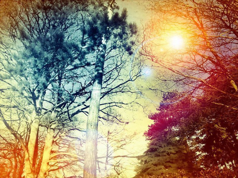 Hugging A TreeInto The Woods Sunsrise Nature Colourmehappy Colour Hometown Enjoying Life Enjoying The Sun Walking Around