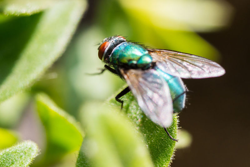 Fly Green Green Fly Insect Insect Photography Macro Photography Nature Plant Wildlife Photography
