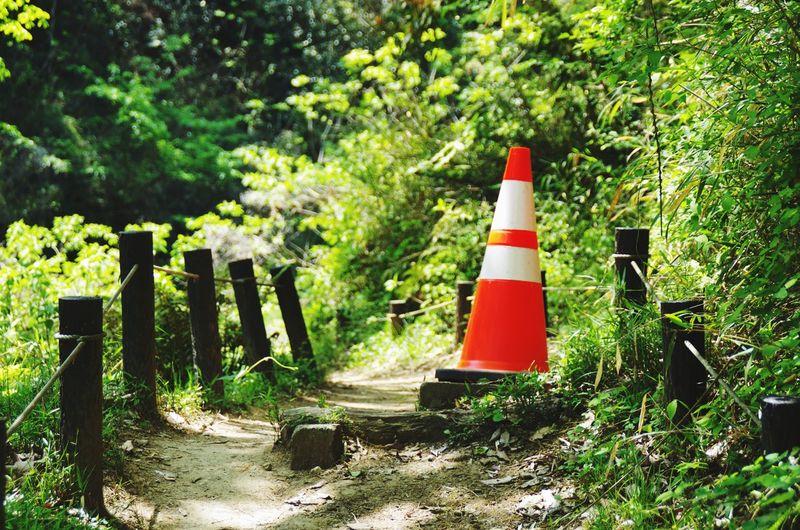 Plant Tree Cone