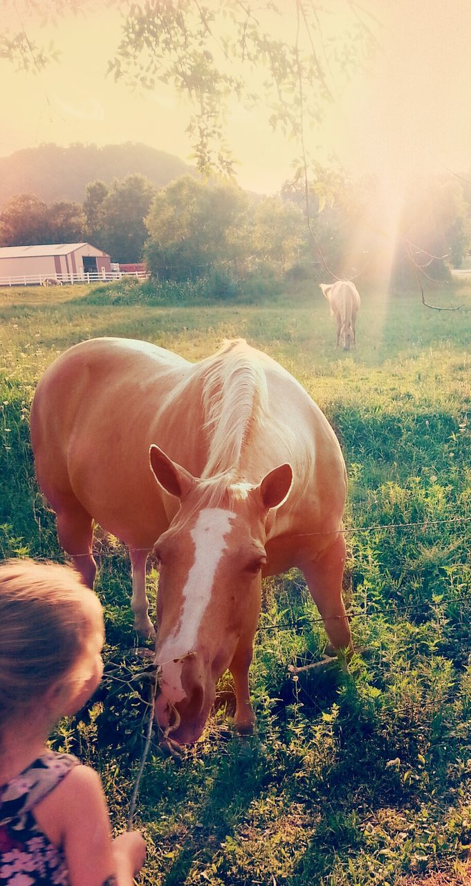 Close-Up Of Horse Looking At Girl On Field During Sunny Day