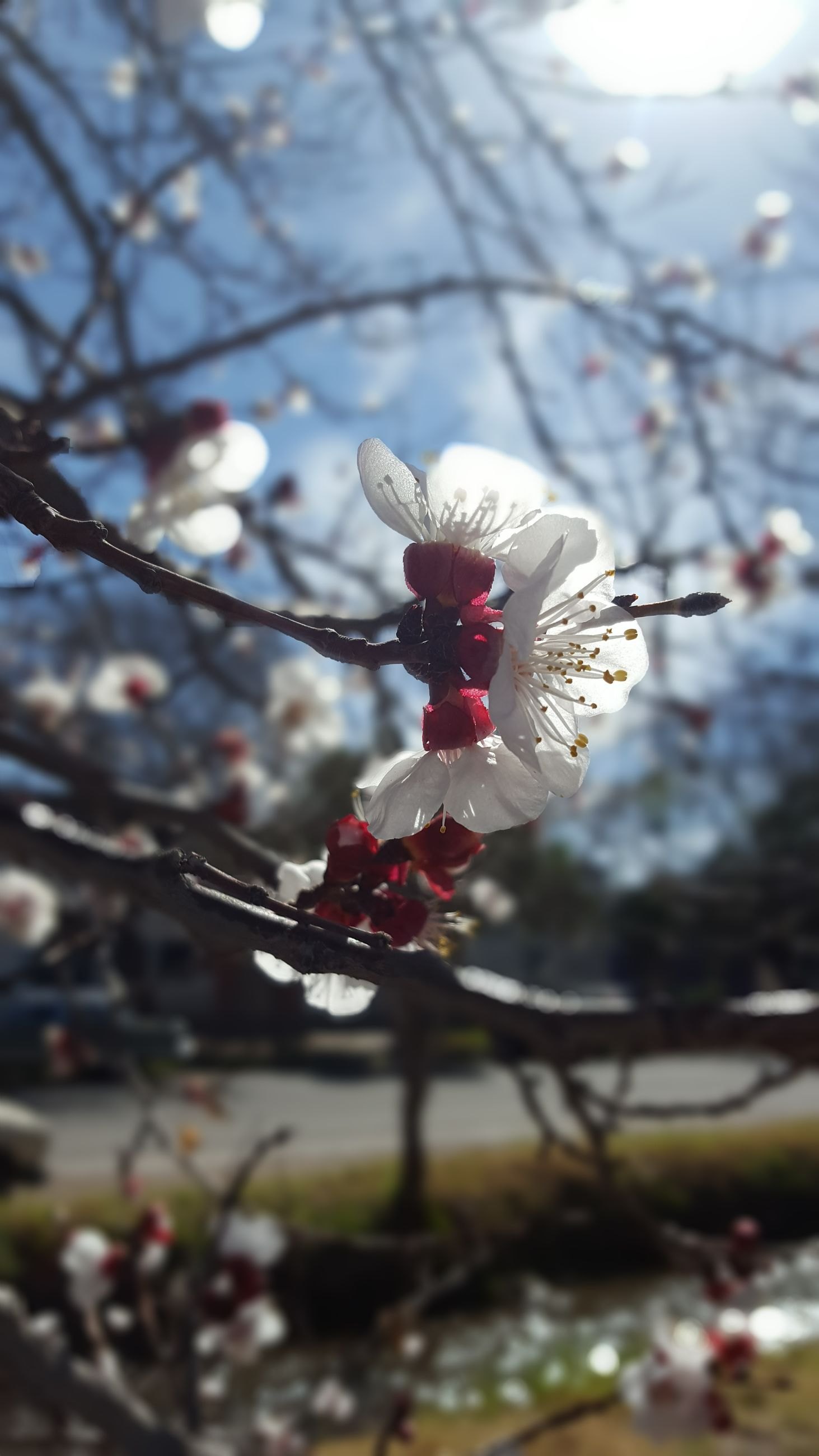 flower, fragility, petal, beauty in nature, freshness, growth, nature, white color, blossom, flower head, botany, branch, one animal, close-up, pollen, plum blossom, springtime, stamen, no people, day, tree, focus on foreground, animal themes, outdoors, blooming, pollination, animals in the wild