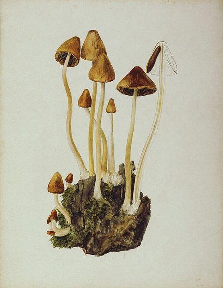 Shrooms Mushrooms Trip