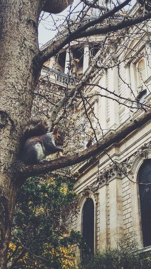 Squirrel at St Paul's Cathedral First Eyeem Photo London Squirrel Autumn Tree Leaves St. Pauls Cathedral  Herbst Baum Eichhörnchen