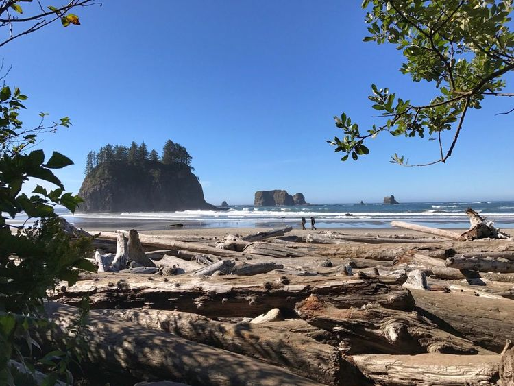 Huge driftwood at second beach in Olympic national Park Tree Trunk, Tree, Fallen Tree Logs Sea Beach Tree Water Nature Clear Sky Beauty In Nature Sand Blue Tranquility Outdoors No People Sky Branch Day Rock - Object Horizon Over Water Scenics