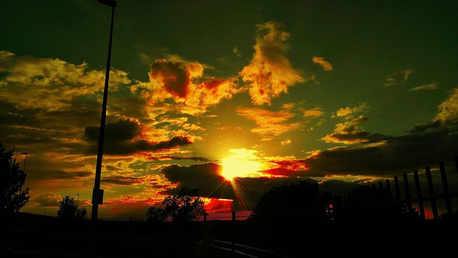 sunset avenue Tree Sunset Tree Area Sky Silhouette Dramatic Sky Atmospheric Mood Moody Sky Romantic Sky