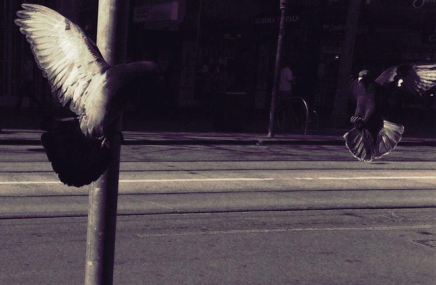 Swanston St #Melbourne Swanston St #Melbourne