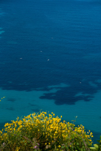 Croatia Croatian Coast Adriatic Adriatic Coast Adriatic Sea Beauty In Nature Blue Close-up Day Flower Growth Nature No People Outdoors Plant Scenics Sea Sky Tranquil Scene Tranquility Water Yellow