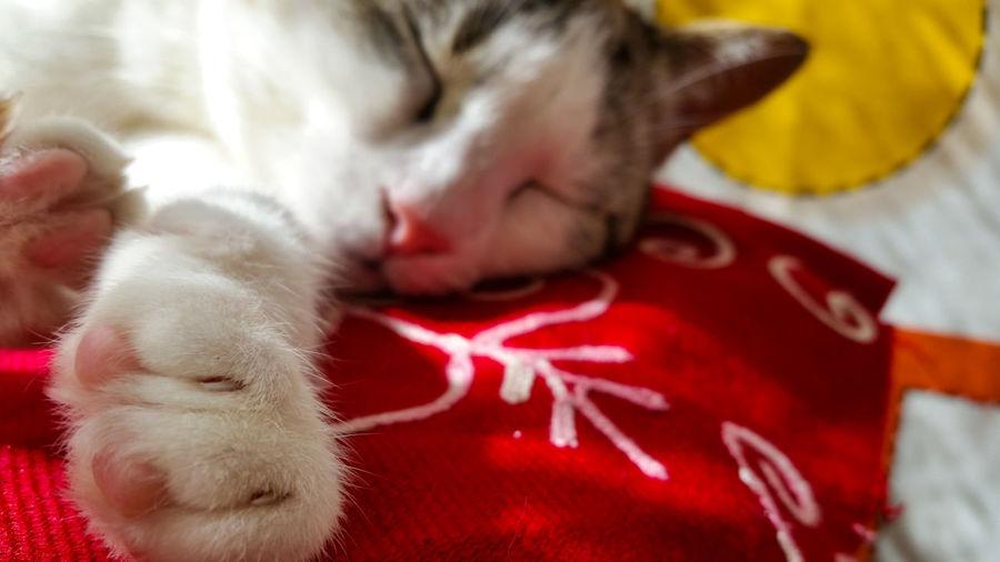 Cat portrait Chilling Tiger Cat Animal Themes Cat Cat Portrait Fluffy Cat Orange Cat Pets Scream Sleep Sunset White Cat