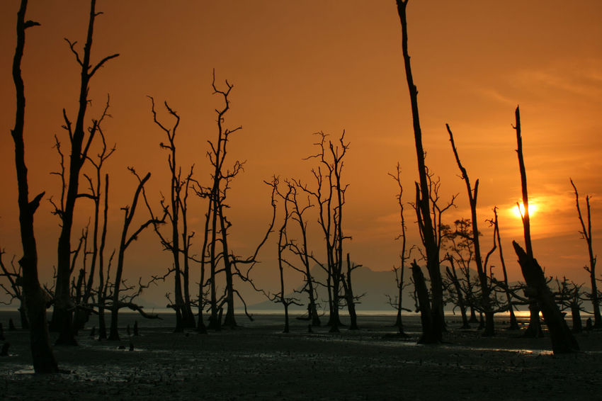 Silhouette of death trees in Bako National Park in Balaysia Bako National Park Bare Tree Beauty In Nature Dead Plant Death Trees Idyllic Land Low Tide Mangroove Forest Nature No People Non-urban Scene Orange Color Outdoors Plant Reflections In The Water Scenics - Nature Silhouette Silhuette Sky Sun Sunrise Sunset Tranquil Scene Tranquility Tree Water