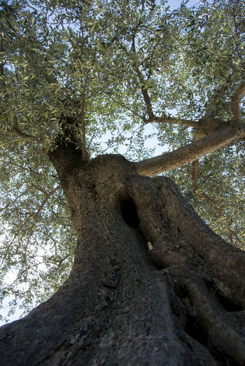 trees photographed from below, with detail of the sky and the leaves Natura Natural Light Tree From Below Trees Alberi Albero Trees And Nature Trees And Sky Trees Branches Against Blue Sky Treescollection
