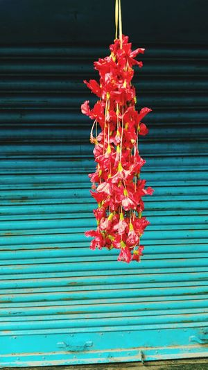 Holy Jajoba Garland In Front Of A Shop