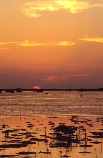 Mangrove Caribbean Sea Shallow Water Lagoon Sunset Sea Water Scenics Beauty In Nature Tranquility Nature Orange Color Tranquil Scene Horizon Over Water Beach Sky Outdoors Sun Silhouette No People Day
