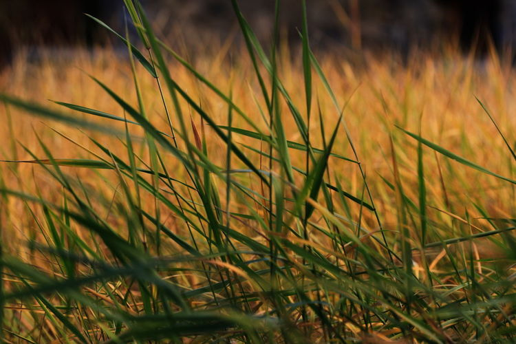 100mm Botany Close-up December 2015 Field Full Frame Grass Nature No People No Snow  Parcines,sudtirol Selective Focus Sunlight