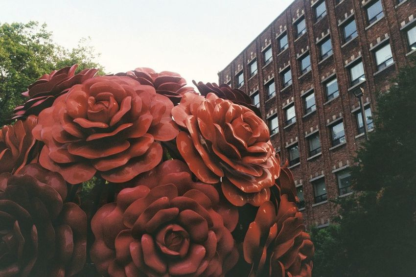 a bouquet Minox 35 GT Kodakcolorplus200 Film Photography Red City Sky Architecture Building Exterior Petal