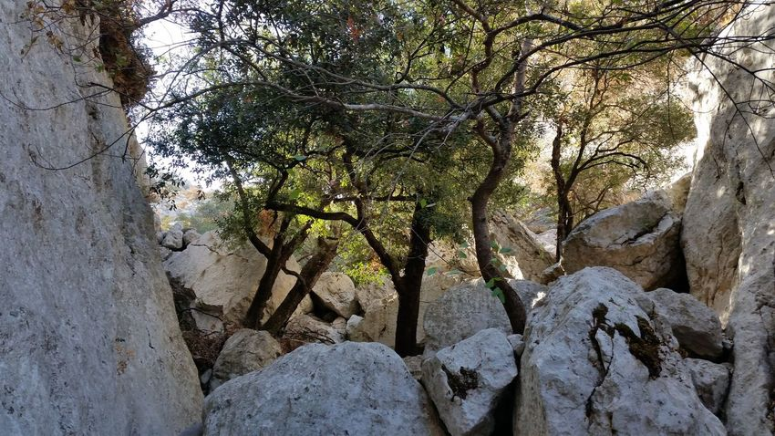 Perspectives On Nature Nofilter Takewithmyphone Perspective Tranquility Nature Photography Photooftheday Outdoors No People Tree Magnificentsardegna Rocks And Trees Beauty In Nature Sardegna Mountain No Filter, No Edit, Just Photography