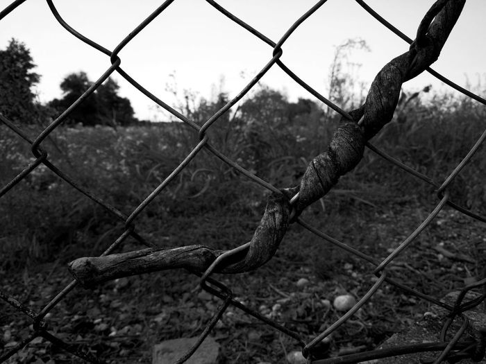 Chainlink Fence Metal Outdoors No People Close-up Nature Fence Photography EyeEm Selects EyeEmBestPics Eyeem Photography My Unique Style Outdoor Photography EyeEm Masterclass EyEmNewHere EyeEmBestEdits Black And White Photography Blackandwhite Photography Black & White EyeEm Master Class EyeEm Gallery The Great Outdoors - 2017 EyeEm Awards EyeEm Best Shots - Nature Eye4photography  EyeEm Best Edits EyeEmbestshots