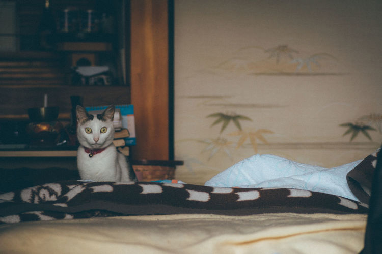 Eyes Altars Animals Atmosphere Capture The Moment Cat Cute Pets Enjoying Life Showcase July EyeEm Gallery From My Point Of View Getting Inspired Hello World Japanese Culture My Country In A Photo Nostalgia Pets Quality Time Relaxing Room Simple Moment Super Retro Ultimate Japan Classic Snapshots Of Life Always Be Cozy