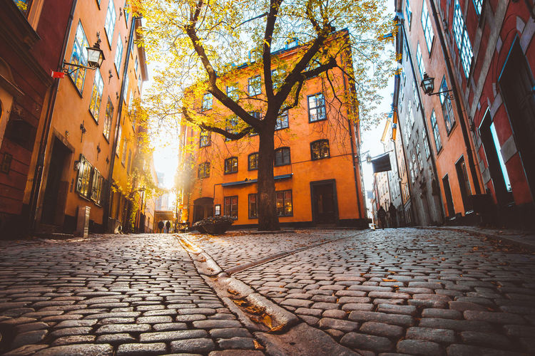 Cobblestone street amidst buildings in city during autumn