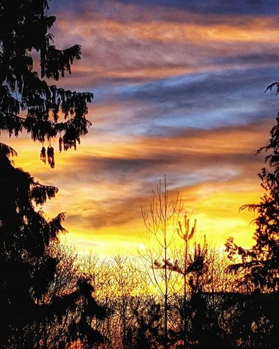 One more of the gorgeous Sunset tonight PNW Photography Igers_seattle Igers_seattle_tuesdaychallenge Sky Color Silhouette Clouds Trees Petitteckelphoto