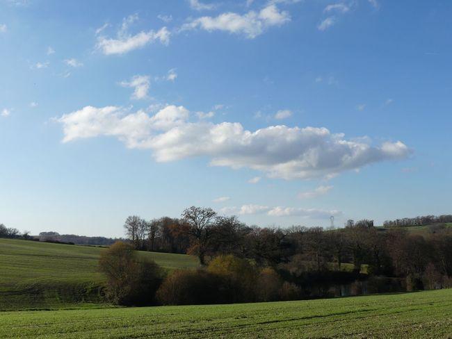 Nature Tree Arbres Beauty In Nature Grass Cloud - Sky Skyfie CIELFIE Ciel Et Nuages