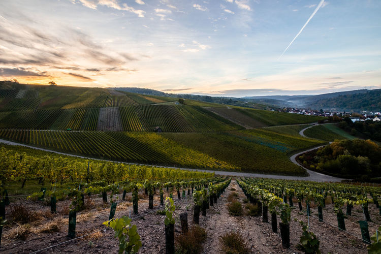 Panoramic view of vineyard against sky during sunset