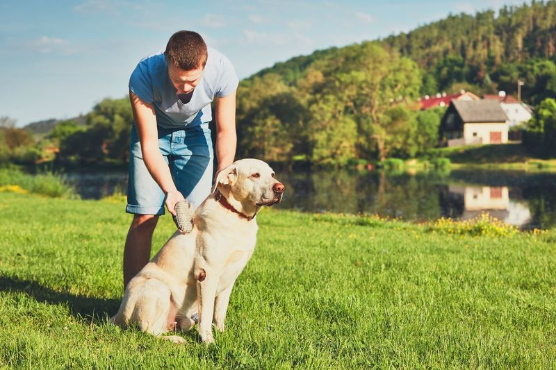 Regular caring for dog. Young man brushing his yellow labrador retriever. Animal Hair Animal Photography Animal Themes Brush Brushing Care Casual Clothing Cleaning Combing Countryside Dog Dogslife Domestic Animals Man Nature Nature One Animal Outdoors Owner Pets Real People Responsibility Rural Village