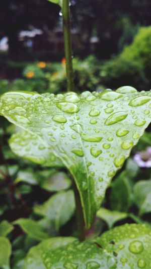 Water Droplets Nature Garden Plant Life