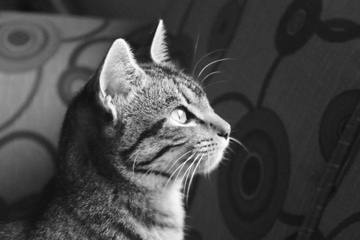 Jugar Mascotas Leslie_Gr_In Mascota Pelos Animal Animals Mascotas 🐶 Cat Cats Gatos Gatitos FeLiNa Felino Bigotes Blancoynegro Black & White Observing Observando Mirando Viendo