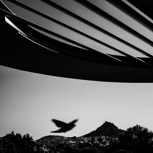 Fly robin fly, up up to the sky Hello World Goodmorning :) Enjoying Life Taking Photos Blackandwhite Global Photographer-Collection Global Photographer Works Exhibition Global Photographers Alliance Beautiful Happy Sunday July