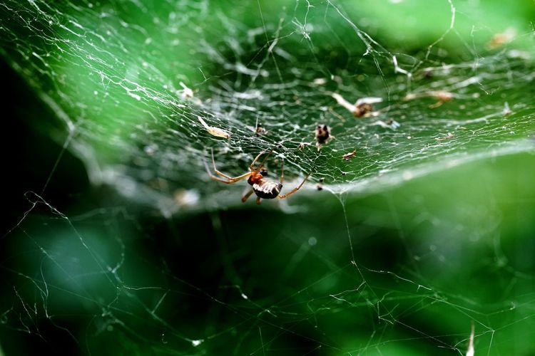 Spider Web Spider Survival Web One Animal Nature Intricacy Animal Themes Animal Leg Animals In The Wild Fragility Danger Insect Animal Wildlife Weaving Focus On Foreground No People Day Trapped Outdoors Macrophotography Sony A7rm2 Fe9028macro Italy 🇮🇹 Insect Collection