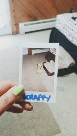 Scrappy's first polaroid picture Polaroid Polaroid Pictures Instax Instaxmini7s