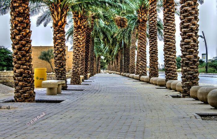 Palms Landscape_Collection Landscapes Palmtrees
