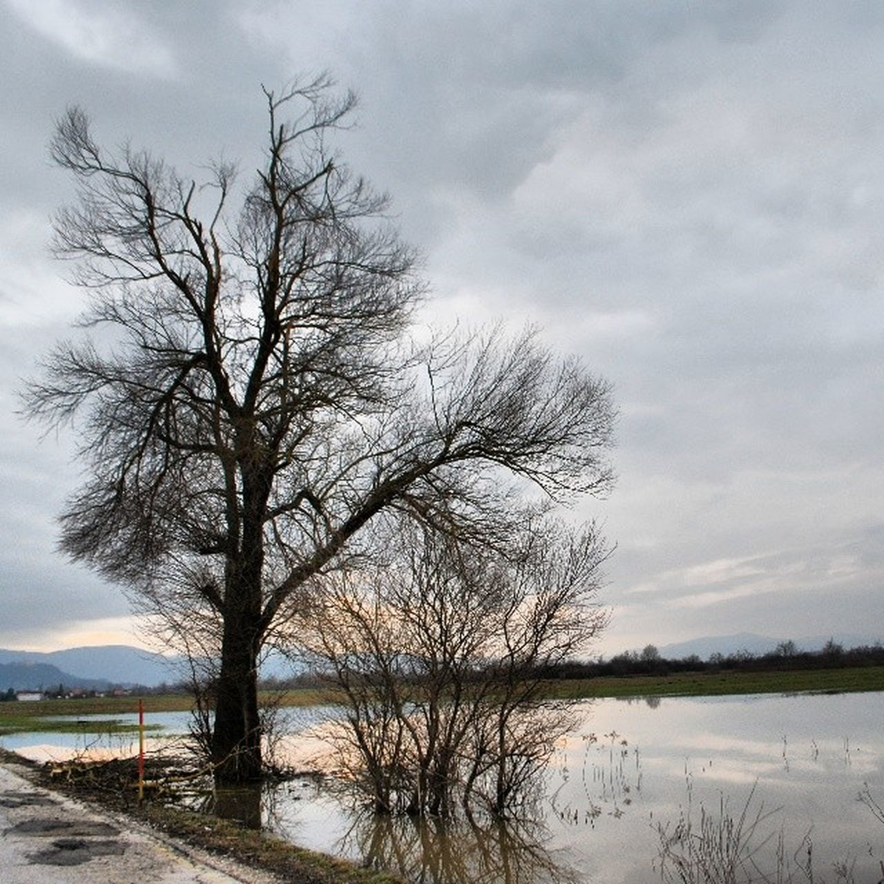 sky, bare tree, tree, nature, water, beauty in nature, tranquility, cloud - sky, tranquil scene, outdoors, scenics, day, no people, branch, landscape, lake
