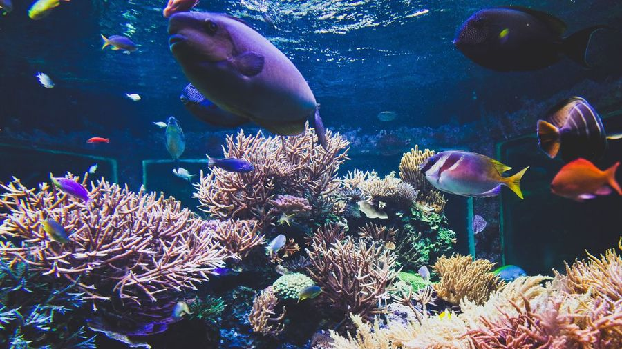 Fish Sea Life Animals In The Wild Underwater Fish Animal Themes Swimming Wildlife Water Plant Aquarium UnderSea Close-up Nature Fish Tank Animals In Captivity Coral Beauty In Nature Sea Fragility Zoology