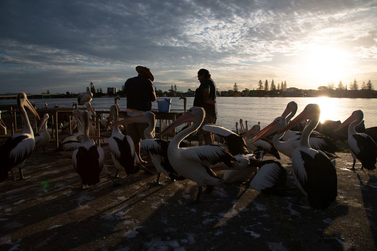 amazing group of pelicans, I've never seen that before!!! and I was so lucky with the light :) Water Sky Cloud - Sky Sunset Nature Beach Beauty In Nature Sea Group Of People Group Of Animals Land Real People Leisure Activity Men Women Lifestyles Relaxation Adult Outdoors Pelicans Fishing
