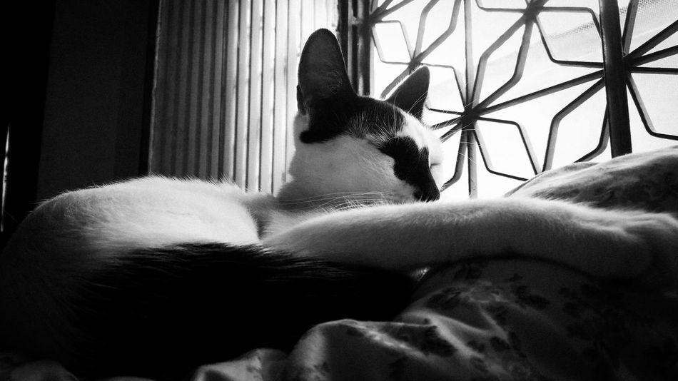 Indoors  Pets Blackandwhite Light And Shadow No People ZenfoneSelfie EyeEm Cat Pet Portraits